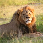 Sign the petition to Congress: Permanently ban import of all big game trophies to United States